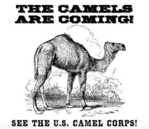 US Camel Corp