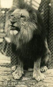 Slats the 1st MGM Lion