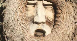 St. Simons Island Tree Spirits