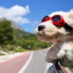 7 Simple Doggo Travel Rules