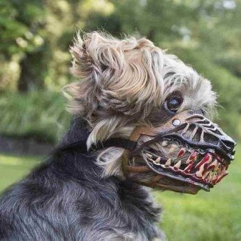 17 Most Aggressive Doggo Breeds Ranked