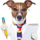16 Travel Doggo Checklist Items
