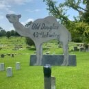 Old Douglas the Confederate Camel 🐪